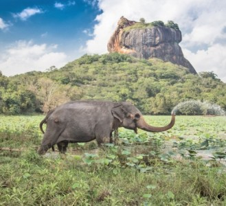 Secrets of Sri Lanka